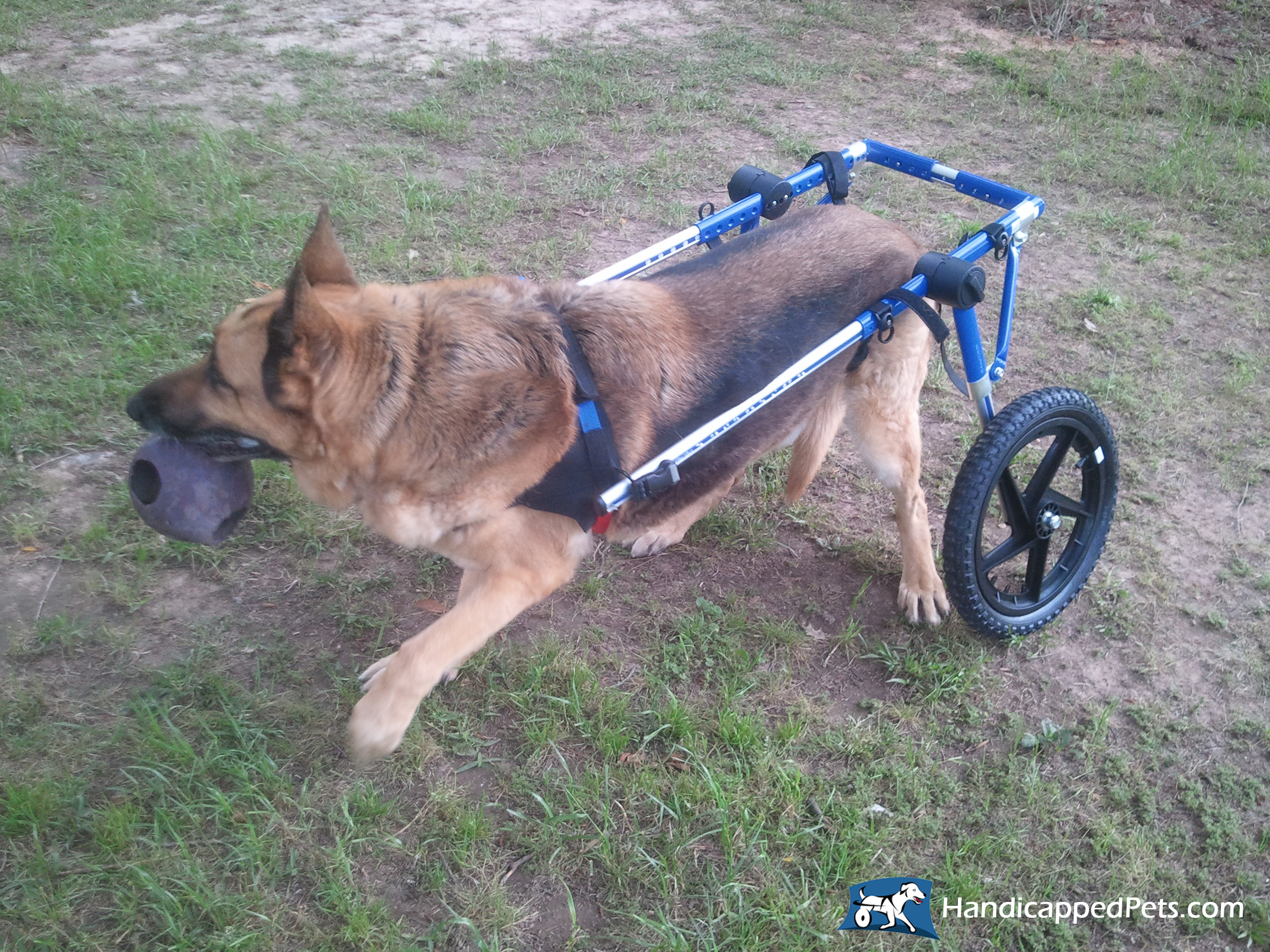 Dog Wheelchair Cat Wheelchair Walkin Wheels