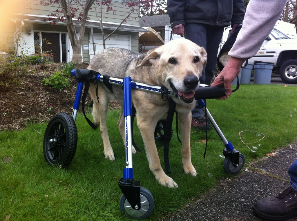 Wheels for dogs dog wheelchairs dog carts handicapped for Handicapped wheelchair