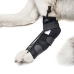 Handicapped Pets Canada No-Knuckling
