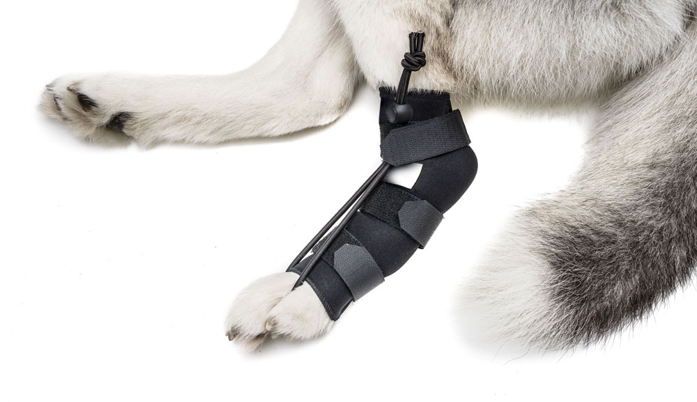 Dog Cat Splints Amp Braces Dog Wheelchairs Dog Carts