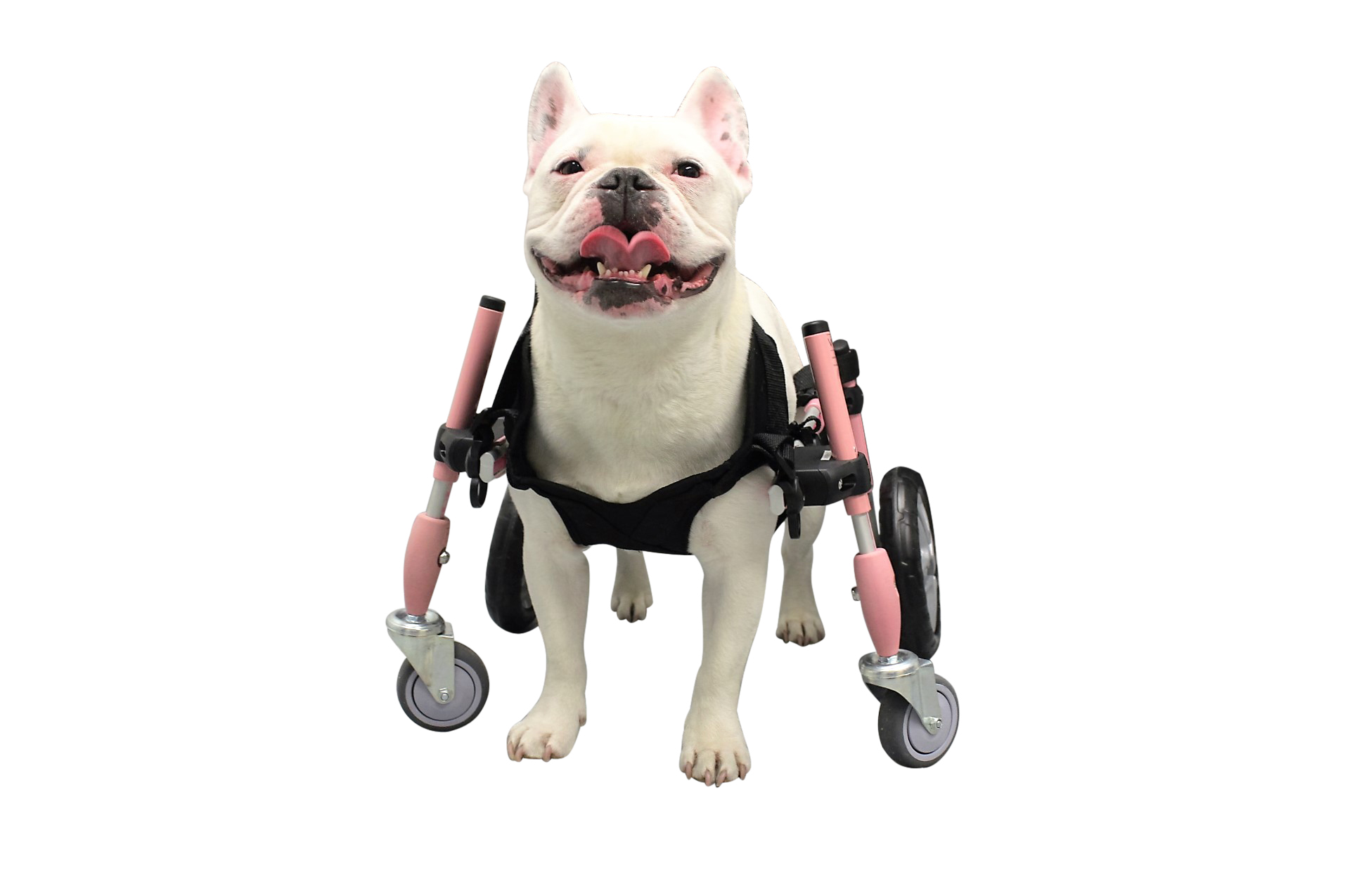 Used Wheelchair Ramps >> Dog Wheelchair Harness | Dog Wheelchairs, Dog Carts, Handicapped Pets Canada